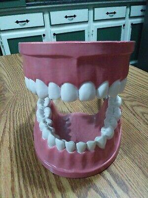 Giant Dental Teeth Educational Classroom Model Tooth Brushing Plasticvinyl