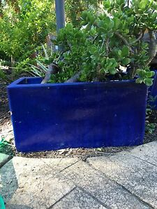 Blue glazed pots Forestdale Logan Area Preview