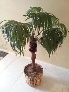 Faux Tropical Palm Trees Rowville Knox Area Preview