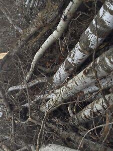 Seasoned poplar firewood