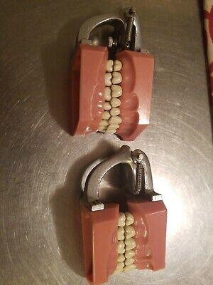 Dentoform Typdont Teeth Dental Students Training Model Sell Dentistry Columbia