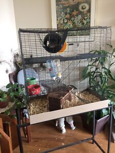FOR PETS ONLY (2 female rats)
