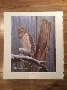Ducks Unlimited Barred Owl Print by Robert Bourque