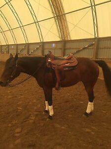 Sweet reining/western pleasure/trail mare for part board