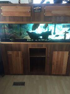 125g aquarium