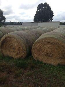 Grass Hay -round bales Invermay Ballarat City Preview