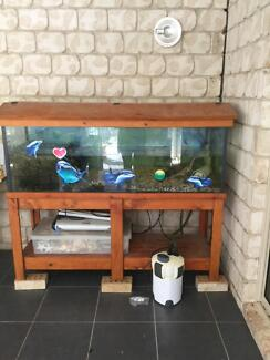 Fish Tank a Complete with Macquarie Short Neck Turtle Ningi Caboolture Area Preview
