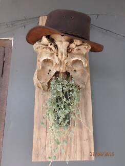 Bush art 'Old Man with Beard' made from cow skull Carrara Gold Coast City Preview
