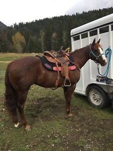 12 year old registered qh appaloosa for sale!