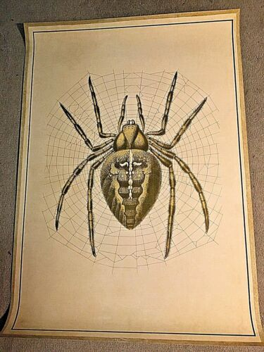 SPIDER EDUCATIONAL CHART