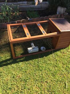 Guinea pig for sale Mount Pritchard Fairfield Area Preview