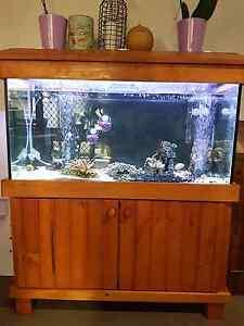 Aquarium freshwater Abermain Cessnock Area Preview