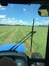 Lucerne hay Grassy / Pasture square bales Singleton Singleton Area Preview