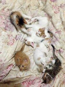 8 week old kittens for sale Sydney City Inner Sydney Preview