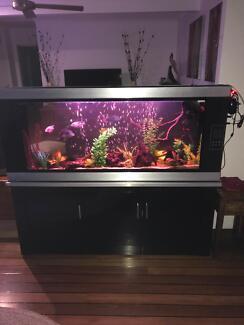 Fish tank room divider