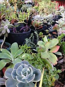 CHEAP PLANTS Lewiston Mallala Area Preview