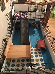 2 x Male Guinea pigs and hutch Kingsley Joondalup Area Preview