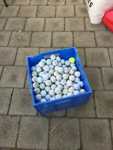 Big box of golf balls Seacliff Park Marion Area Preview
