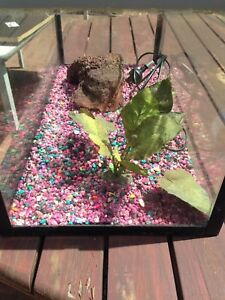 Fish tank with pump excellent condition Hamersley Stirling Area Preview