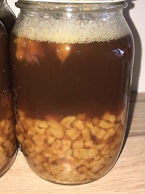 💯 HEALTHY WATER KEFIR GRAINS 200gr THE BEST! ❤️ FULL SUPPORT AND