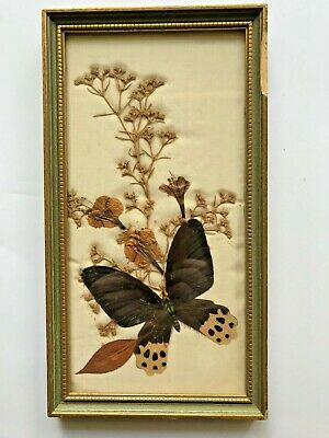 Mildred Roberts Vintage Framed Pressed Butterfly Art