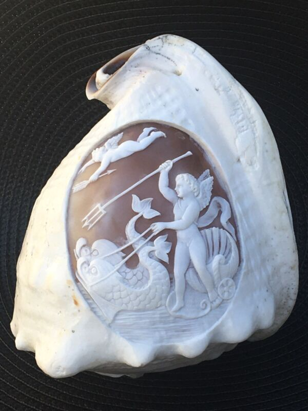 "Carved Cameo Conch Shell 6"" Mythological Poseidon Riding Dolphins Neoclassical"