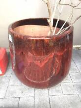 LARGE POT (600mm dia.) for sale - $40 Lane Cove North Lane Cove Area Preview