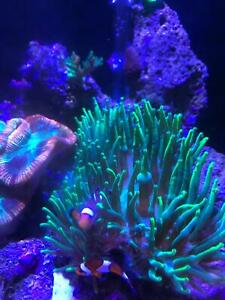 aqua one reef | Gumtree Australia Free Local Classifieds