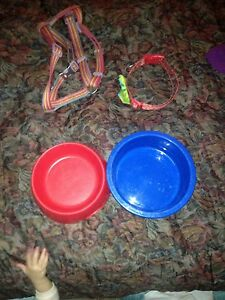 Harness, collar and two bowls