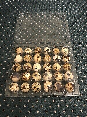 Lot Of 25 Plastic Quail Egg Cartons 30 Count Clamshell Trays