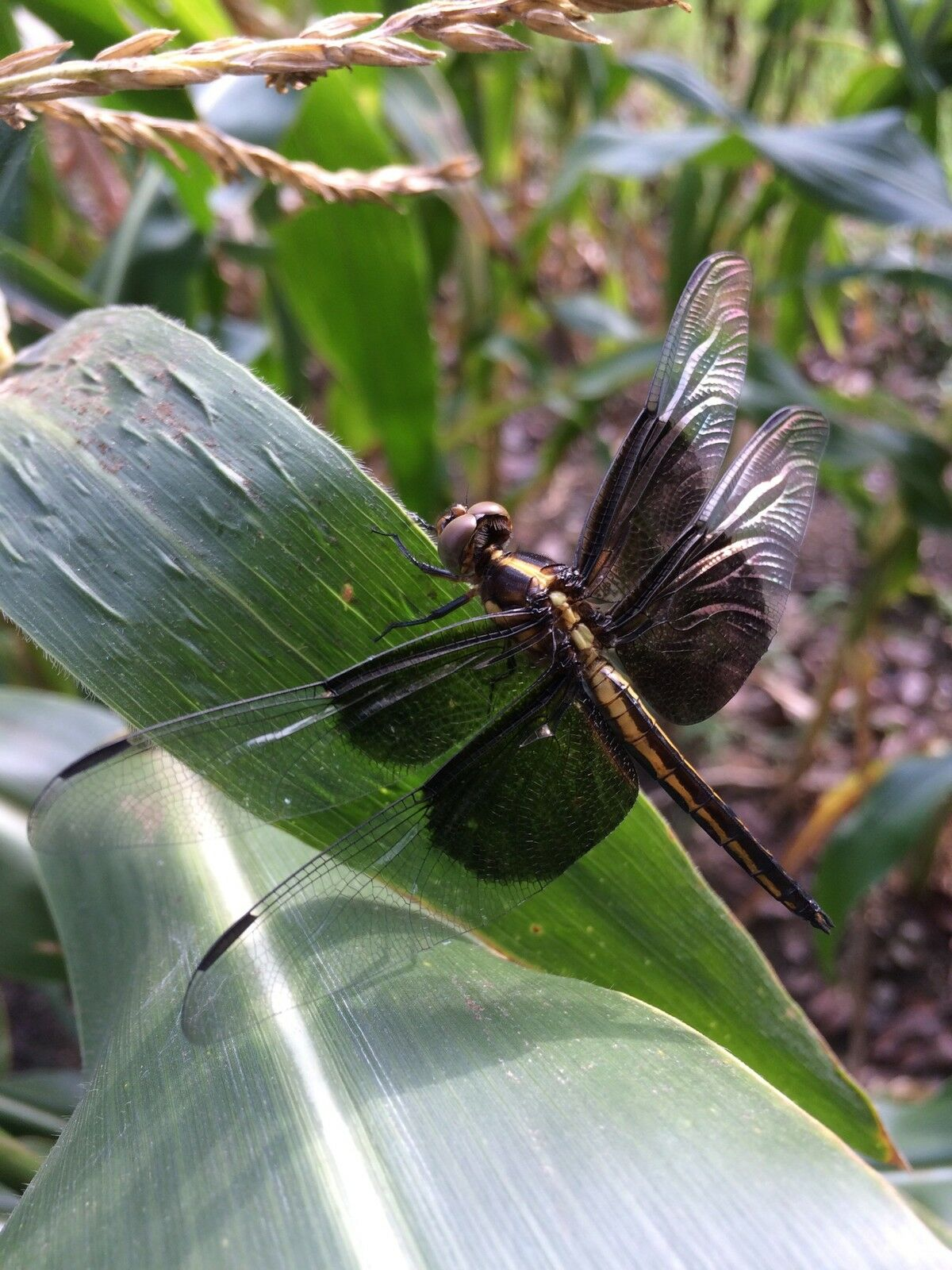 Dragonfly Ranch