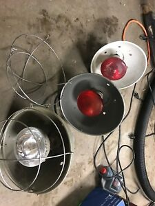 Poultry lamps