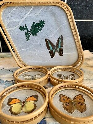 taxidermy Butterflies Bamboo & Glass Coasters & Tray