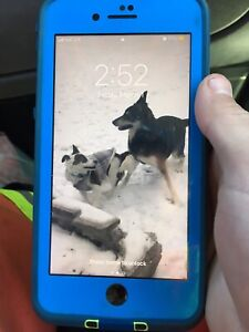 Mint condition iPhone 7 Plus 32gig
