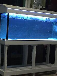 4FT FISH TANK AQUARIUM FULL SET UP South Granville Parramatta Area Preview