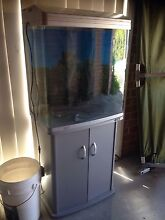 Complete fish tank!! Woonona Wollongong Area Preview