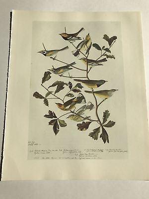 John James Audubon Bookplate Plate 327 Bird Print 1966 Cape May Golden Warbler