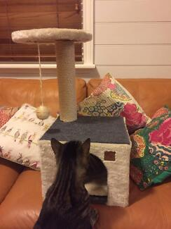 cat scratching pole and play tower