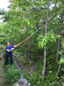 Tree Removal and trimming! Specializing in small/odd jobs.