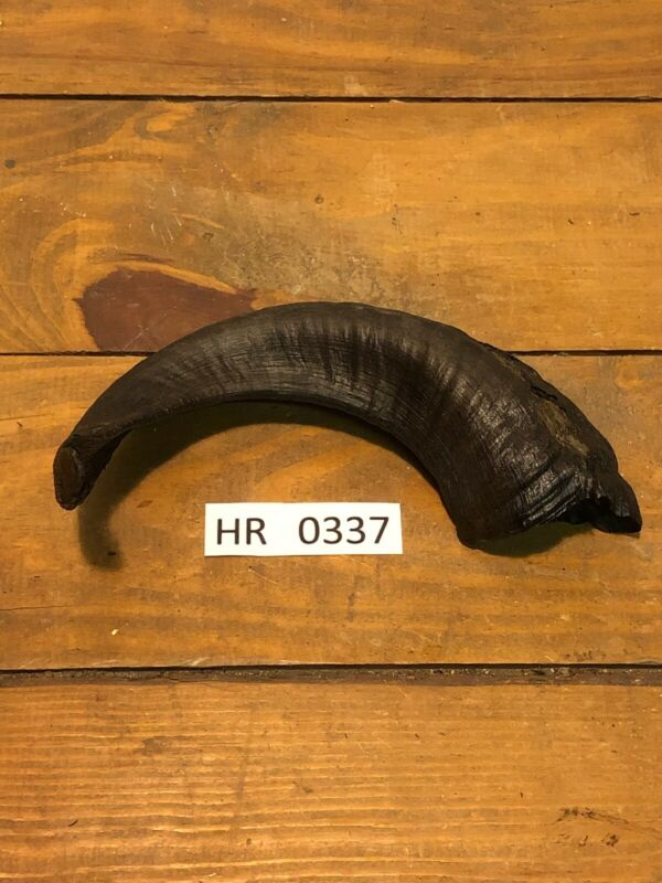 Dark Ram Horn Outdoors Hunting Wildlife Decoration texas Hill Country HR0337