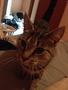 Beauftiful and loving 2 and a half year old female  Windsor Region Ontario image 2