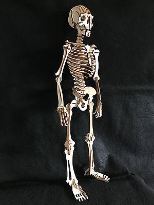 Laser Cut Wooden Skeleton 3D Model/Puzzle Kit