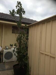Perth Region Wa Home Amp Garden Gumtree Australia Free