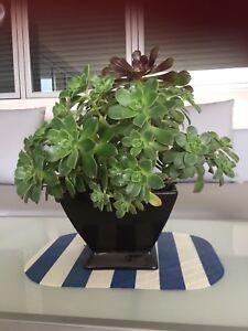 Succulent Terrarium Table Decoration Display 45cm New Vases