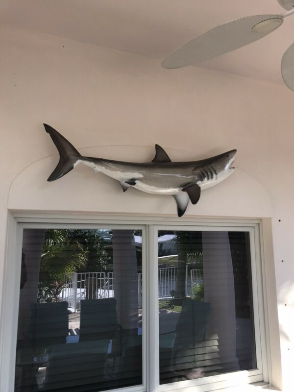 """54"""" Great White Shark Mount from Gray Trophy Taxidermy, Pompano Beach FL."""