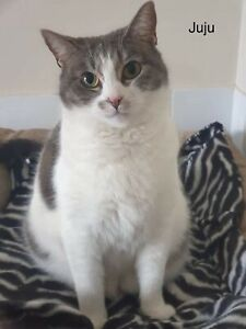 """Juju"" Perth Animal Rescue vet work inc cat/kitten"