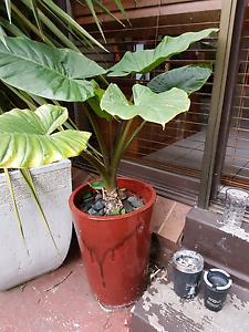 Assortment of plants in pots Reservoir Darebin Area Preview