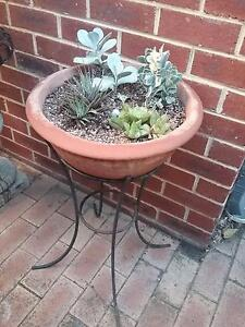 Plant stand with small succulents Wembley Cambridge Area Preview
