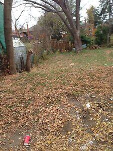 Yard clean up Oakville / Halton Region Toronto (GTA) image 1