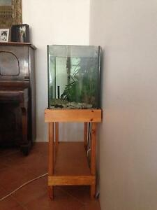 Fish Tank with 1 tropical fish Bedford Bayswater Area Preview